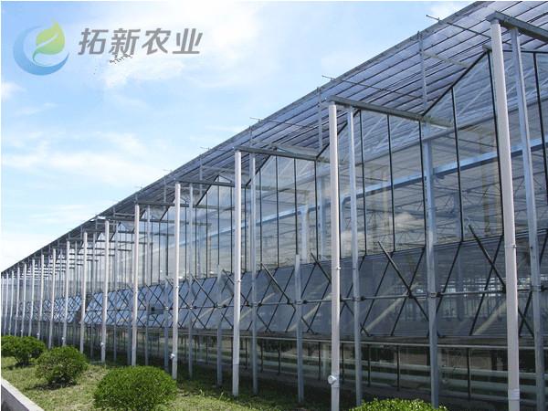 安庆正规薄膜温室大棚在线咨询 欢迎咨询「拓新供」