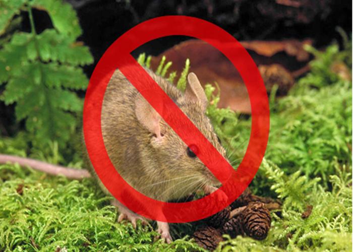 昆明灭老鼠妙招 服务为先 昆明东普电器服务供应