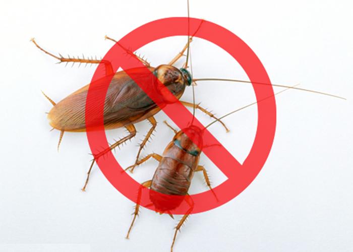 五华区灭蚊虫服务收费,灭
