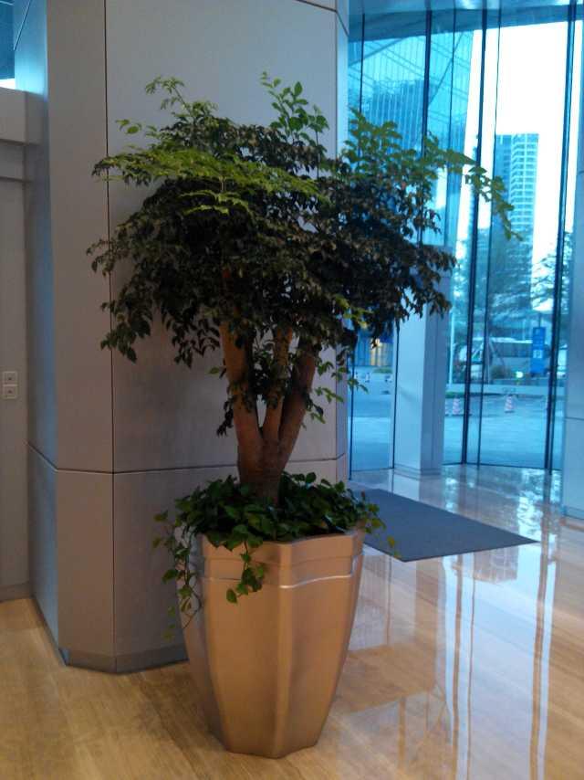 綠植花卉養護,綠植