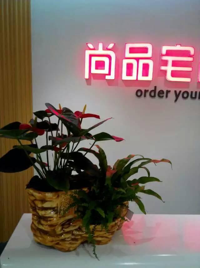 鯉城浮橋蘭花公司