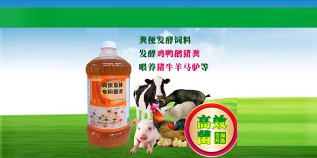 牛粪发酵剂菌种,发酵剂