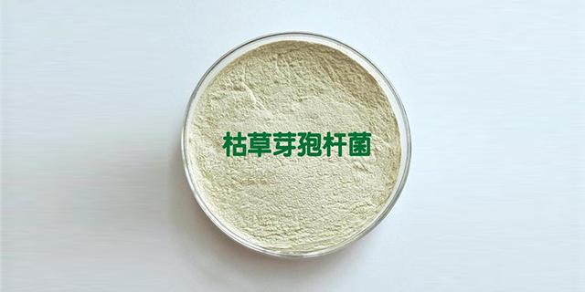 浙江水产用枯草芽孢杆菌 服务为先 山东得和明兴贸易供应