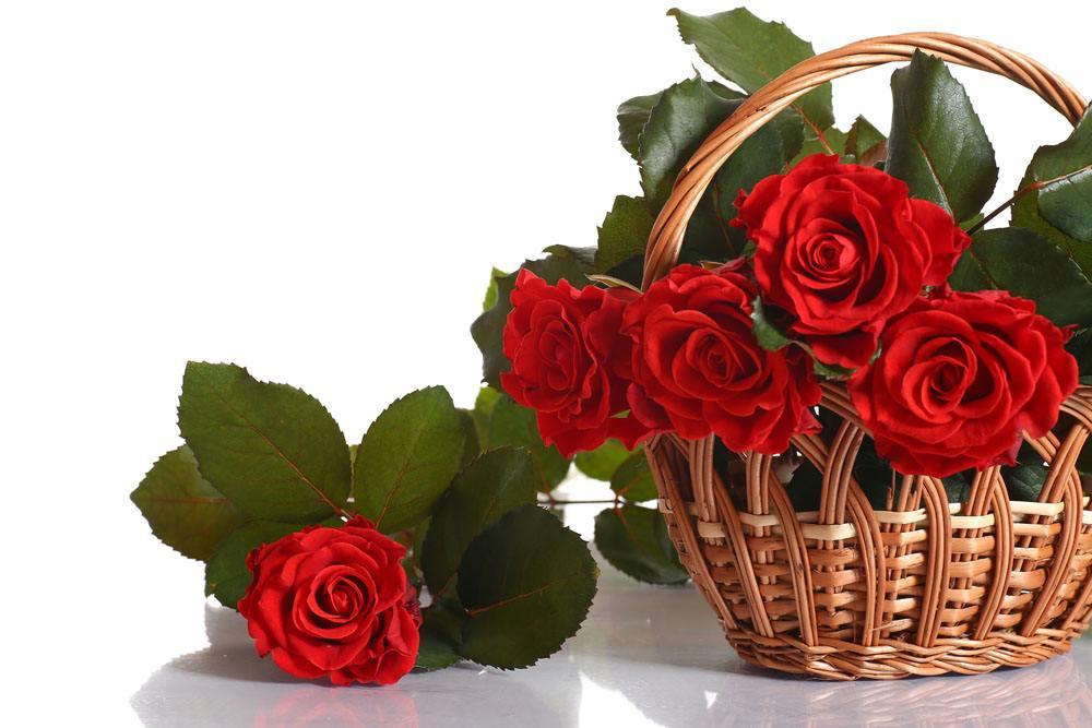 安徽正宗玫瑰哪家好,玫瑰