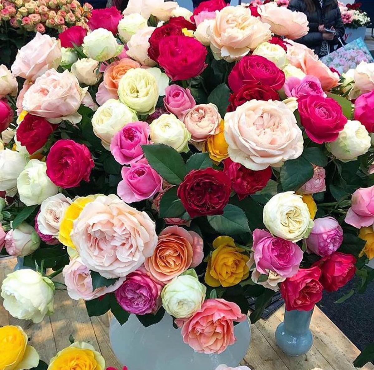 宁夏省钱玫瑰基地性价比高企业,玫瑰基地