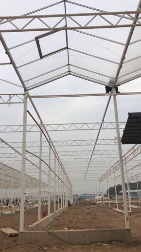 福建蔬菜温室种植大棚 真诚推荐 伟铭阳光温室工程供应