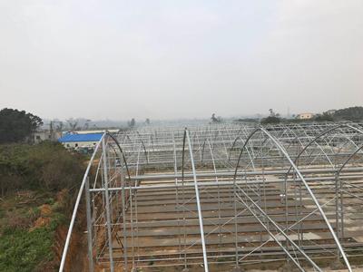 漳州阳光温室大棚造价 服务为先 伟铭阳光温室工程供应