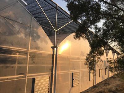 厦门玻璃温室大棚建设 服务为先 伟铭阳光温室工程供应