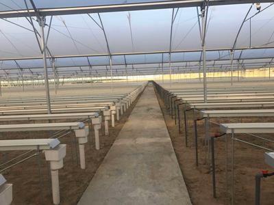 福建連棟溫室大棚建設廠家 歡迎咨詢 偉銘陽光溫室工程供應