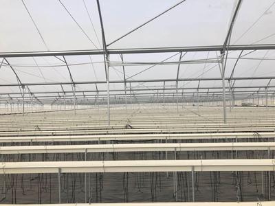 廈門無土栽培溫室建造 服務為先 偉銘陽光溫室工程供應