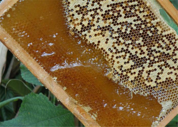 野生蜂蜜 誠信經營 云南雅楠生物科技供應