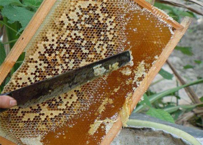 昆明蜂蜜多少钱一斤 诚信经营 云南雅楠生物科技供应