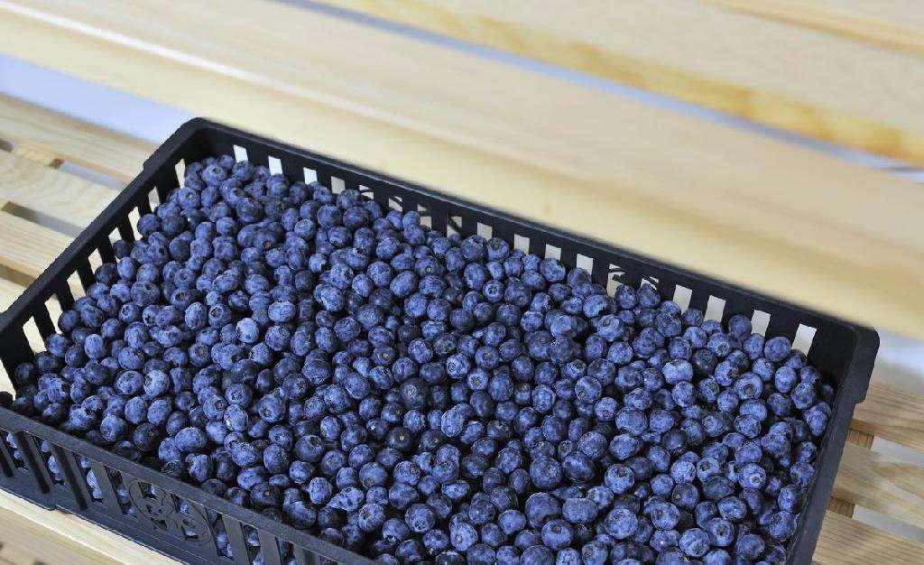煙臺知名速凍藍莓規格尺寸 歡迎咨詢「萊陽華衍食品供應」