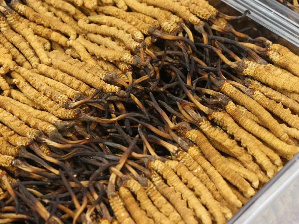 安徽作用虫草,虫草