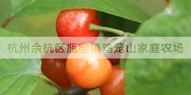 德清双休采摘樱桃方便 服务至上「鸡笼山家庭农场供应」