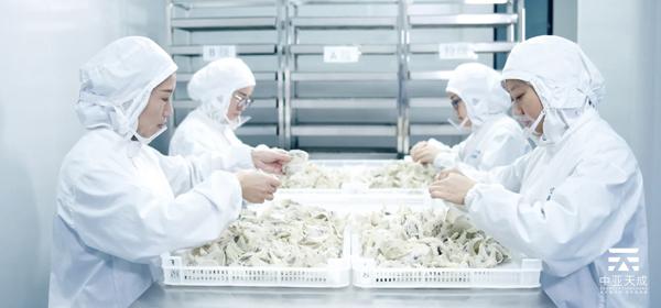 厦门鲜炖燕窝OEM工厂 值得信赖 中亚天成供应