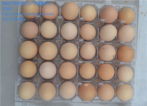 泰州草鸡蛋厂家直销