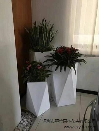 深圳市翠竹园林花卉有限公司