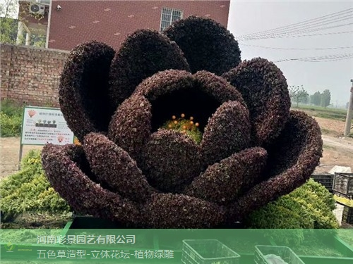 宁德植物绿雕生成厂家 铸造辉煌「河南彩景园艺供应」