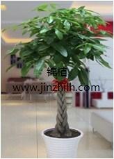 上海锦植绿化工程有限公司