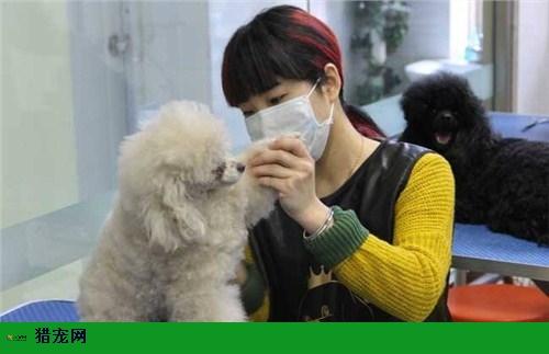徐州正规的宠物人才招聘平台,宠物人才