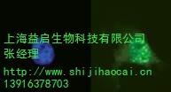 上海益启生物科技有限公司
