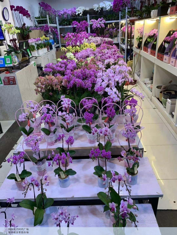 崇明区知名鲜花批发价格