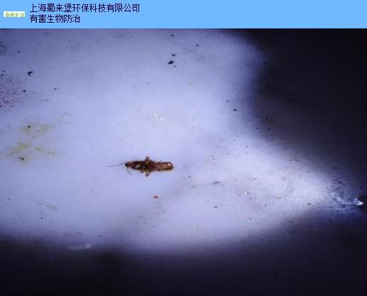 闵行区工厂灭蟑螂服务放心可靠,灭蟑螂