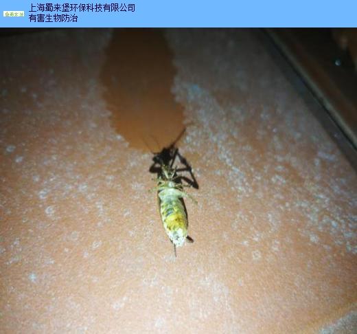 上海正规灭蟑螂服务电话 客户至上「上海蜀来堡环保科技供应」