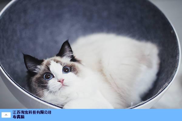 宿迁布偶猫多少钱一只 来电咨询 江苏淘宠科技供应