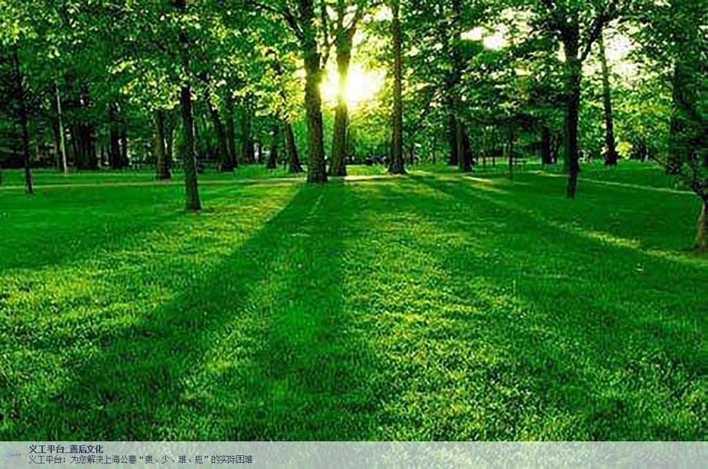 寶山區找樹葬推薦,樹葬