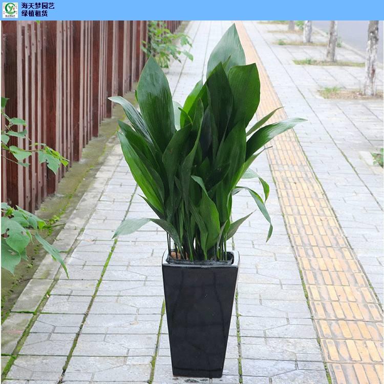 植物租赁绿植租摆,绿植租摆