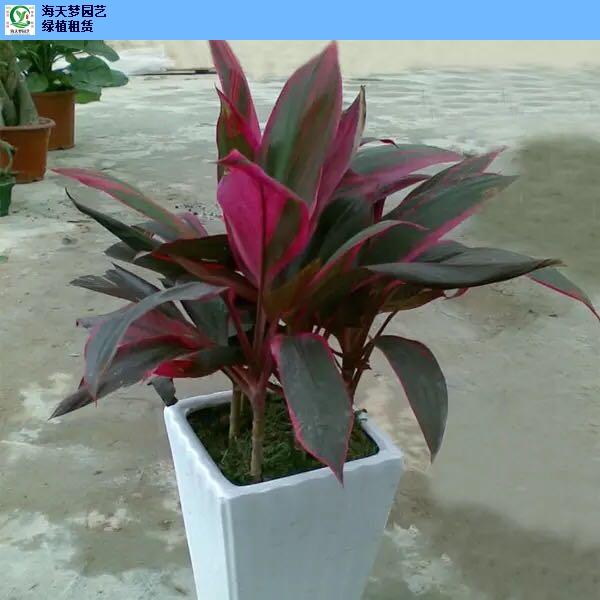 办公植物花卉租赁价位,花卉租赁