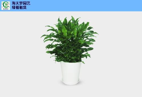 软件园花卉租赁实体花店,花卉租赁