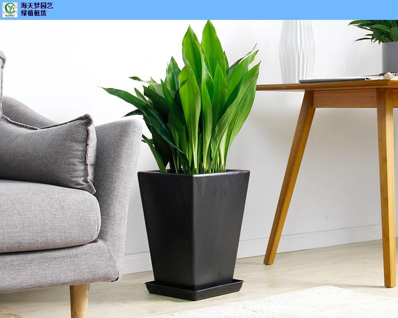 惠山区家装花卉租赁,花卉租赁
