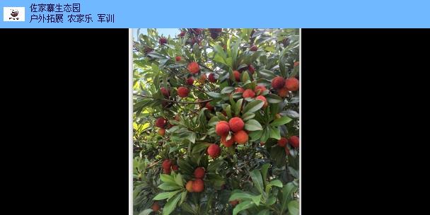 东乡区卡丁车活动方案 诚信经营 江西佐家寨生态农业发展供应