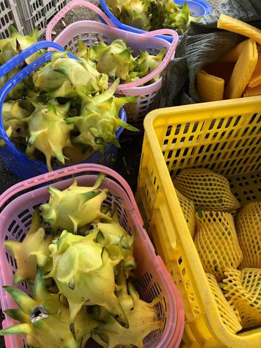 玉溪無刺黃龍果苗銷售 歡迎咨詢「廣州市增城大鄉里果樹種植供應」