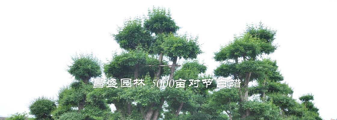 湖北京山昌盛园林有限公司
