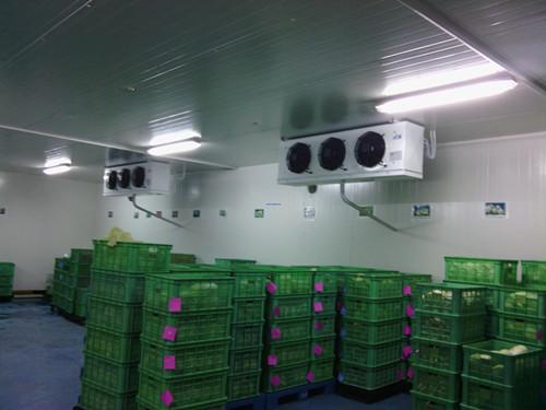 福州水果冷藏庫廠家