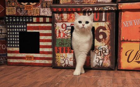 北市区哪里有宠物猫繁殖 口碑推荐「昆宠生活馆」