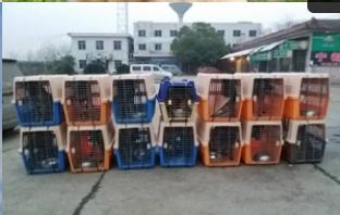 全國放心寵物代運公司「飛祥速遞供應」