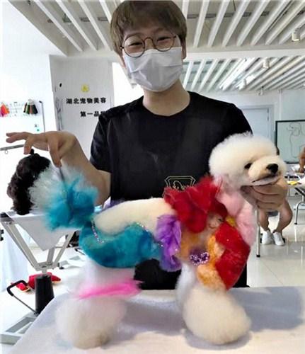 青山区正规宠物美容师价格 信誉保证「武汉彼丕振兴宠物咨询供应」