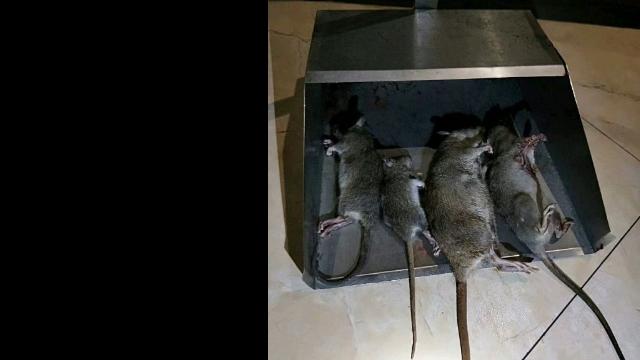 昆山食品厂除鼠,除鼠