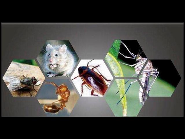 上海工廠消殺害蟲服務推薦「江蘇華美環保工程服務供應」