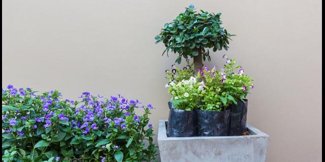 栖霞区商务楼绿植租摆价格是多少,绿植租摆