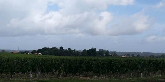 欧洲法国进口山西清心葡窖量大从优「 山西清心葡窖国际贸易供应」
