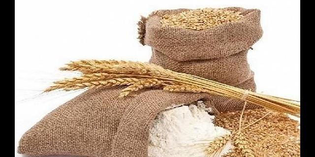 高產小麥品種寧春四號價格優惠 高產豐收「武威豐田種業供應」