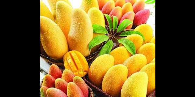 无锡同城水果配送「无锡金一圣农产品供应」