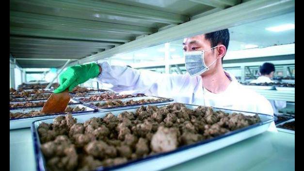 徐匯區環保土壤檢測哪家好 抱誠守真 上海綠環商品檢測供應