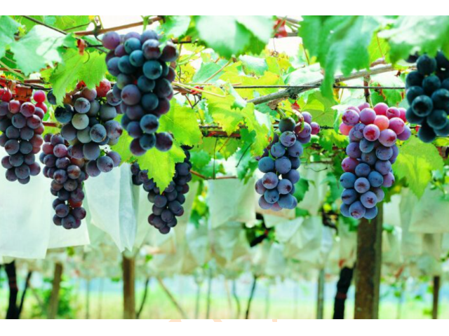 吴江各种水果批发价格 欢迎咨询 苏州市开拓果蔬贸易供应